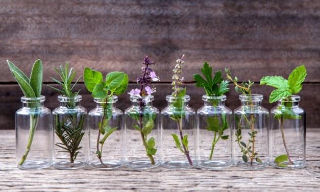 12 hierbas medicinales que puedes plantar en agua dentro de casa