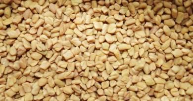 , Las semillas de fenogreco tienen propiedades antidiabéticas, curan el páncreas y aumentan la producción de insulina