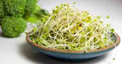 El brote de brócoli podría ayudar a controlar la esquizofrenia