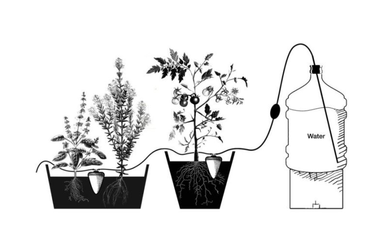 El vaso de cerámica que riega tus plantas durante más de 1 mes