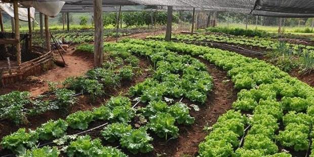 La producción orgánica argentina es segunda en el ranking mundial
