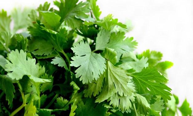 La ciencia demuestra que el cilantro descontamina el cuerpo: elimina metales pesados
