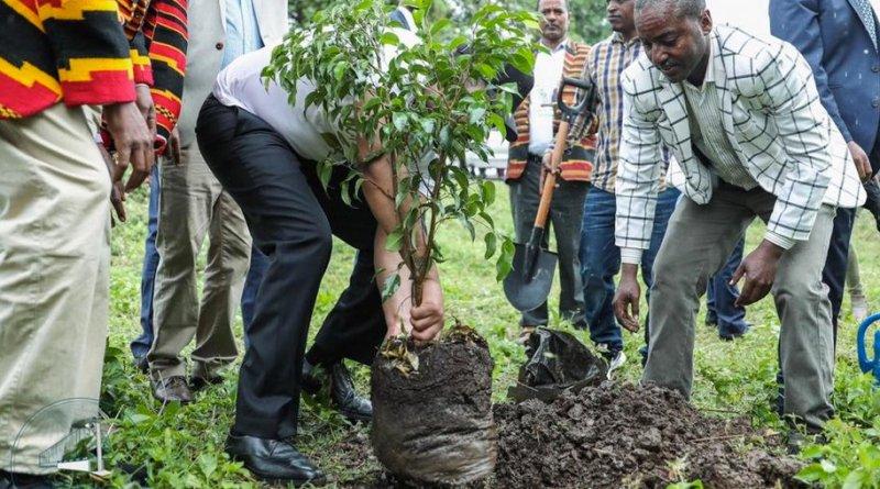 Etiopía planta 350 millones de árboles en solo 12 horas logrando un nuevo Récord mundial