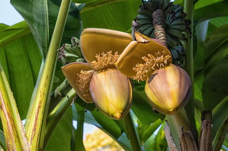 , Joven Ecuatoriana logra filtrar y purificar agua con restos de Plátano
