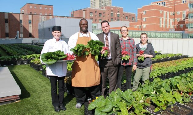 El huerto en la azotea de este hospital proporciona 3200 Kg de verduras orgánicas al año para sus pacientes