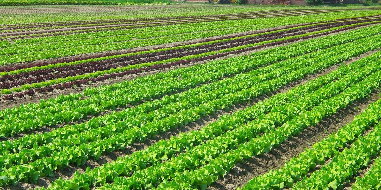 Florianópolis prohíbe el uso de agrotóxicos