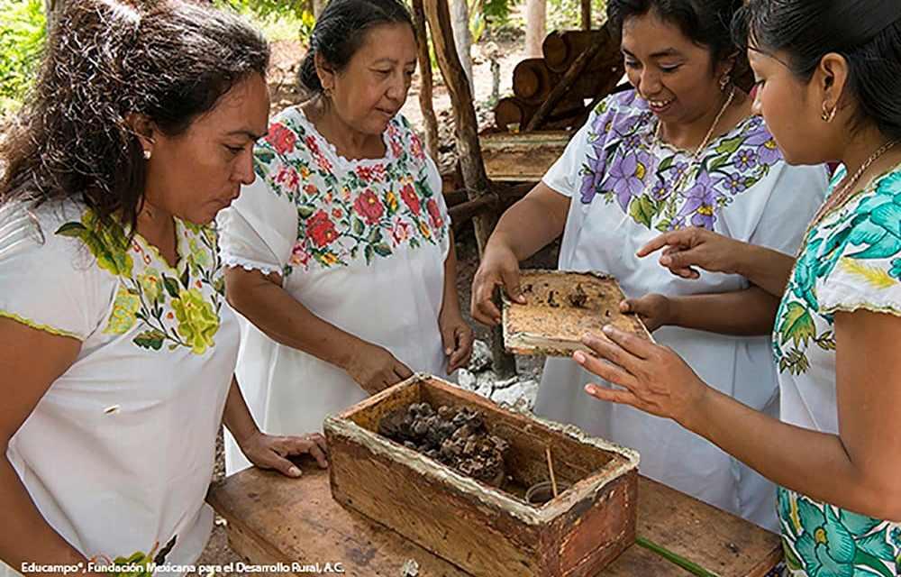 Mujeres mayas protegen a las abejas «sin aguijón» de la extinción