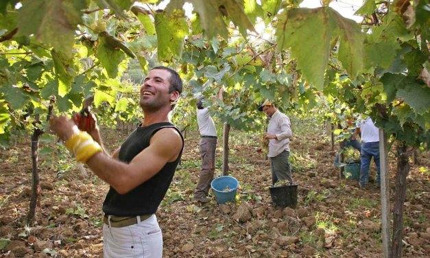 Sicilia recupera su agricultura ancestral y vence a las multinacionales