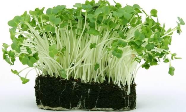 Estudio: estas plantas podrían convertirse en fuentes de B12