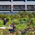 ¿Qué es un huerto comunitario? Beneficios, y un paso a paso de cómo iniciar uno