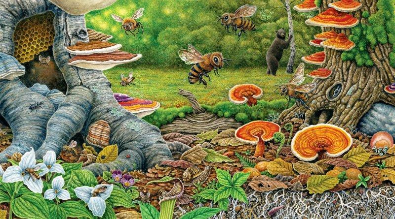 abejas hongos