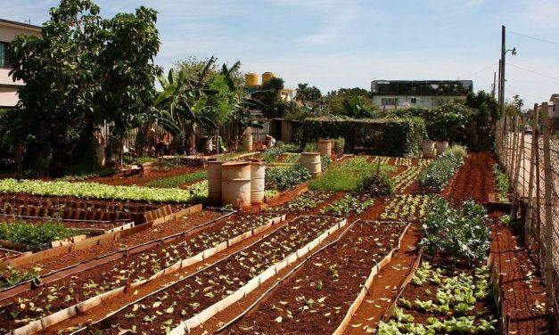 La agricultura urbana de Cuba muestra la forma de evitar el hambre