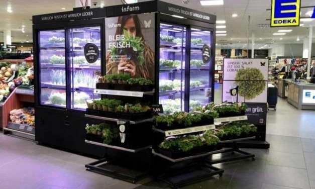 Este Supermercado cultiva alimentos orgánicos en la misma tienda