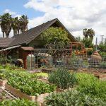 Esta familia produce más de 3000 kg de alimentos por año en su huerta urbana
