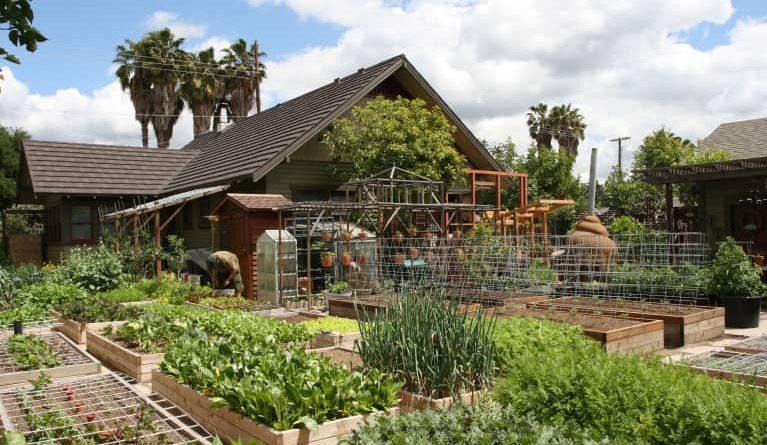 Agricultura en el patio trasero, una nueva filosofía familiar