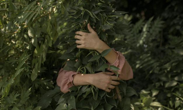 Ecuador se convirtió en el primer país del mundo en declarar los Derechos de la Naturaleza