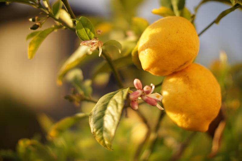 Lo creas o no, congelar limones puede ser lo mejor que puedes hacer con ellos