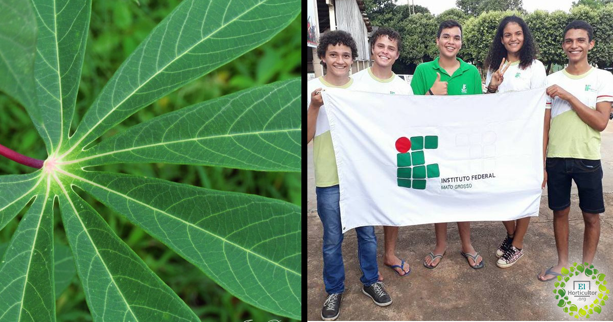 Estudiantes Brasileños crean pañales biodegradables hechos a base de Yuca
