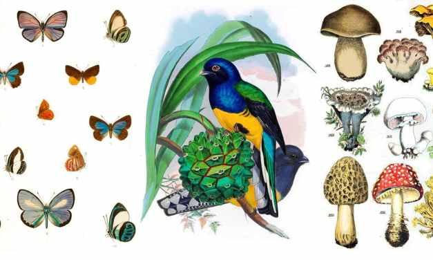 Liberan colección de 2 millones de ilustraciones de plantas, hongos y animales para descarga gratuita