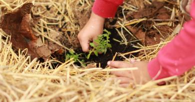 12 métodos de cultivo inusuales que funcionan