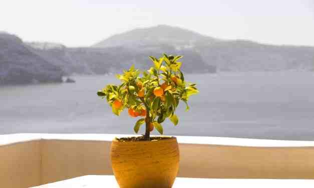 Guia Completa: Cómo cultivar Árboles Frutales en Macetas