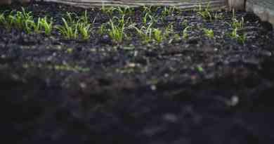 Beneficios del Compost en el suelo de Cultivo