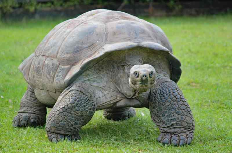 Después de 100 años, Vuelven a nacer tortugas en Galápagos