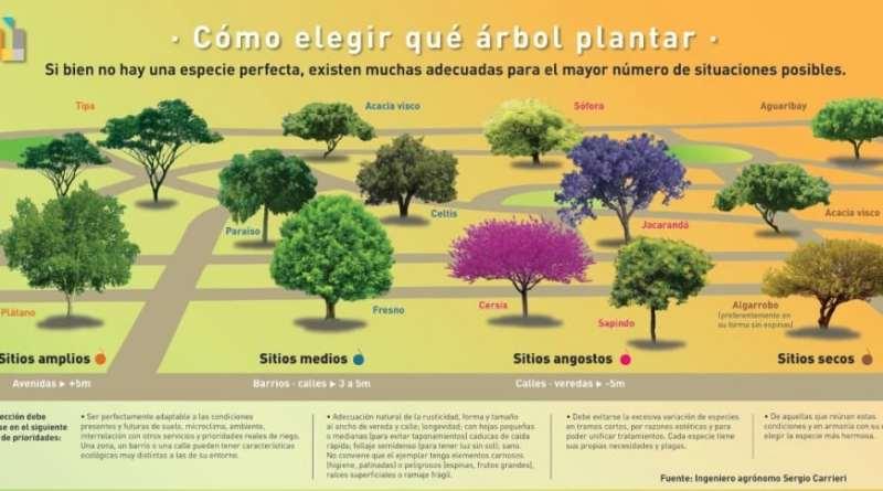 Esta tabla interactiva te ayuda a elegir qué árbol plantar