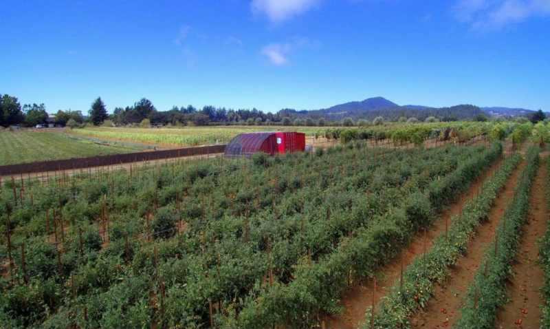 Este contenedor trae todo lo necesario para montar un huerto y alimentar a 150 personas