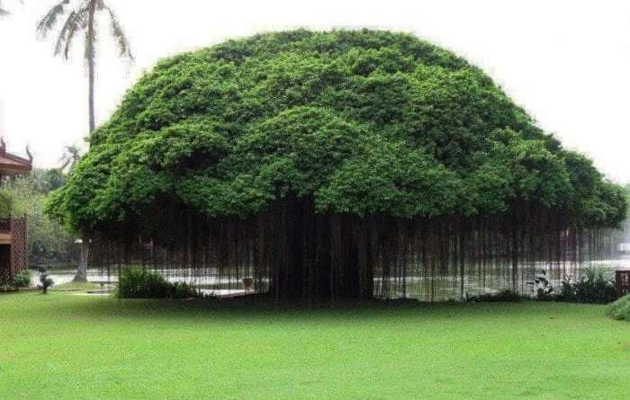 Los estudiantes filipinos deberán plantar 10 árboles para poder graduarse