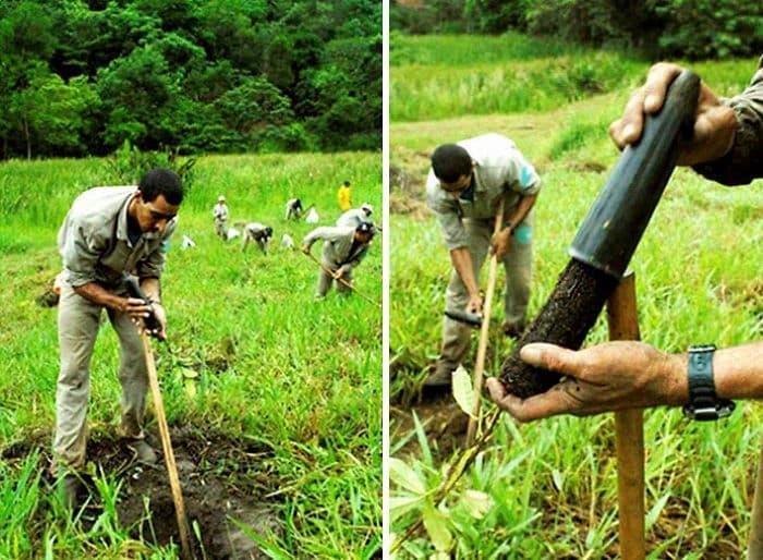 Pareja planta 2 millones de árboles en 20 años y logra restaurar un bosque