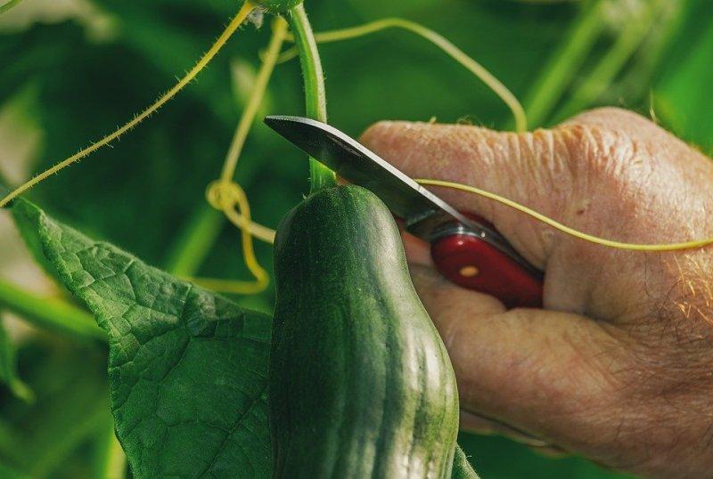 10 alimentos que crecerán felizmente en el balcón de tu apartamento