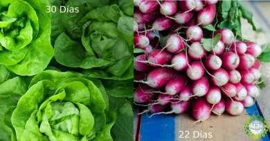 , 16 verduras que cosecharás en menos de 60 días.