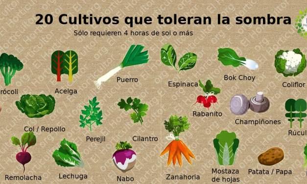 20 Alimentos que puedes cultivar a la sombra