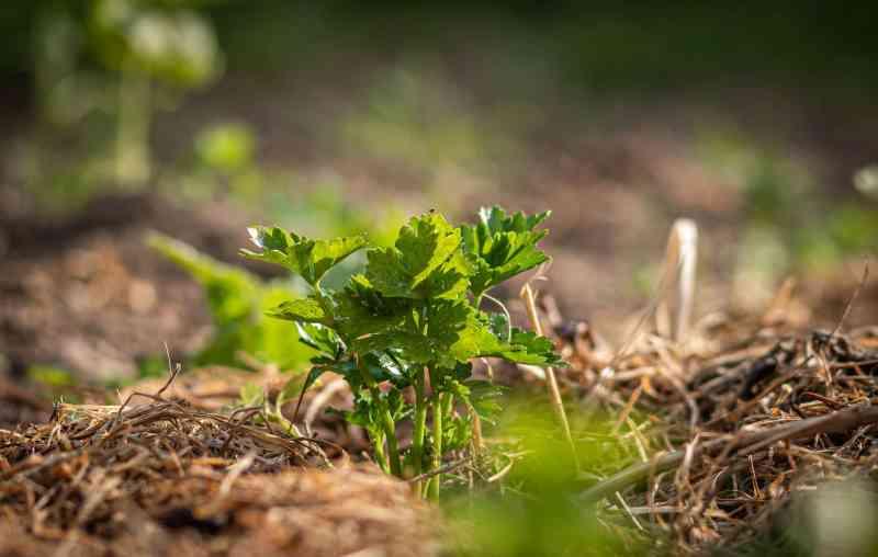 , 5 Formas de proteger tus plantas de una helada repentina