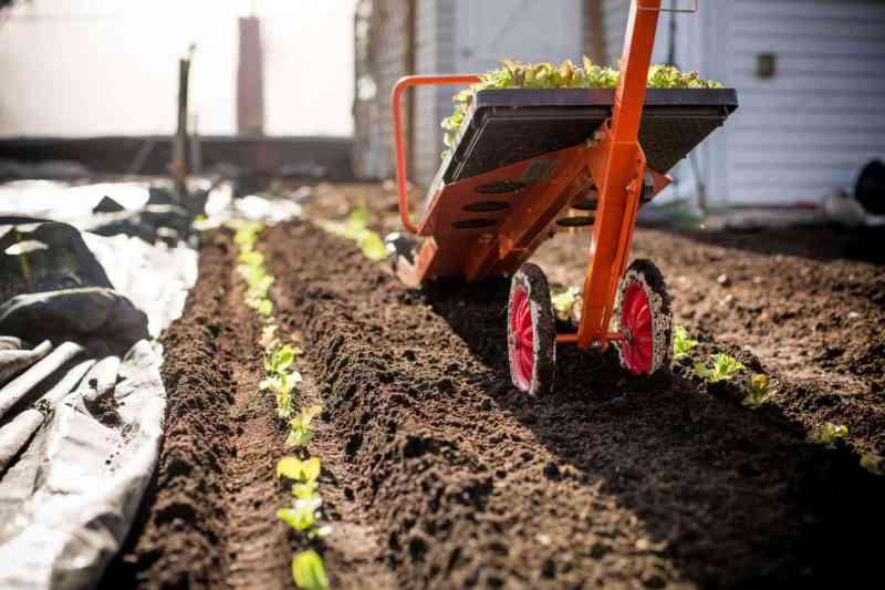 Esta máquina es capaz de plantar cientos de plántulas en sólo unos minutos