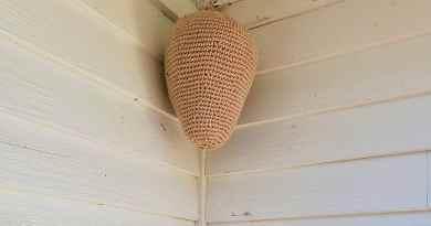 Este nido hecho en crochet ha mantenido a las avispas lejos durante años