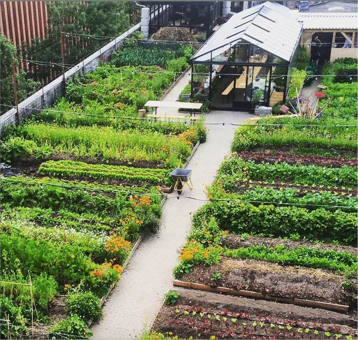 Los huertos urbanos podrían alimentar al 15% de la población según estudio.