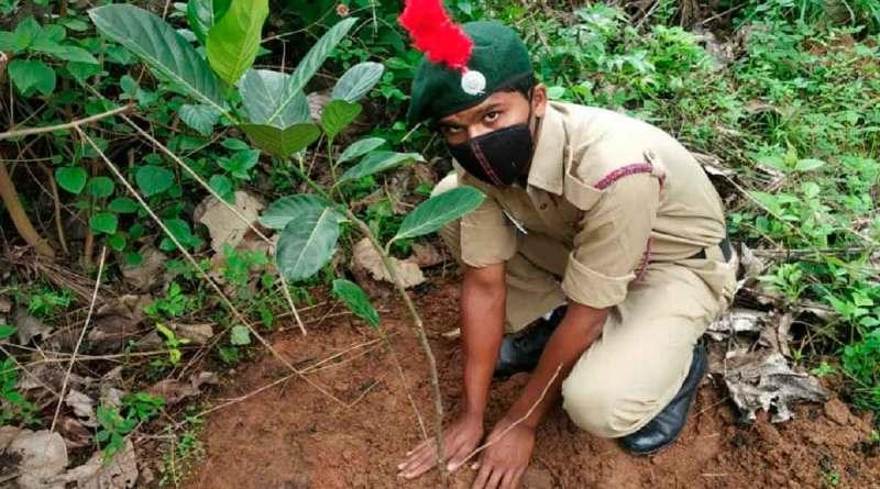 India: 2 millones de personas plantan 20 millones de árboles en solo 1 día