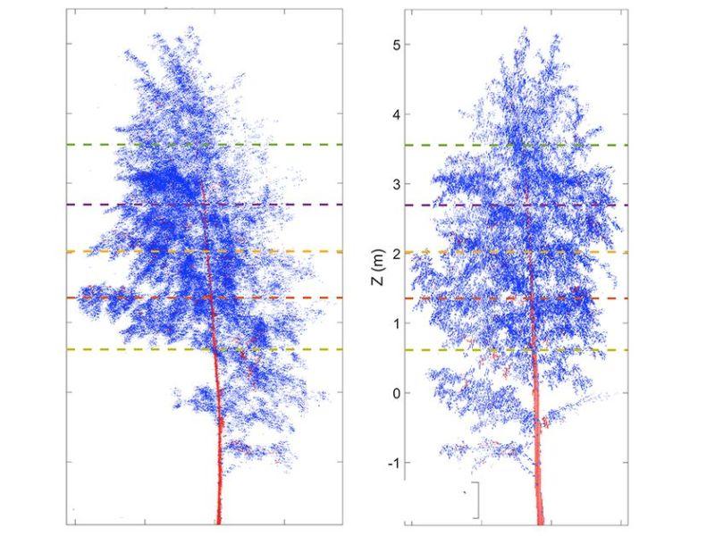 Los árboles también duermen por la noche, según un nuevo estudio