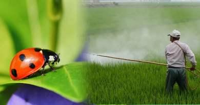 , Adiós agrotóxicos: los insectos pueden reemplazar a los pesticidas contra las plagas
