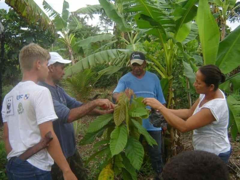 La Agrofloresta genera el doble de ganancias que la soja en la Amazonía