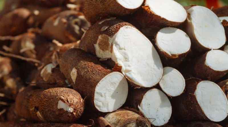 ONU declara la mandioca como alimento del siglo XXI