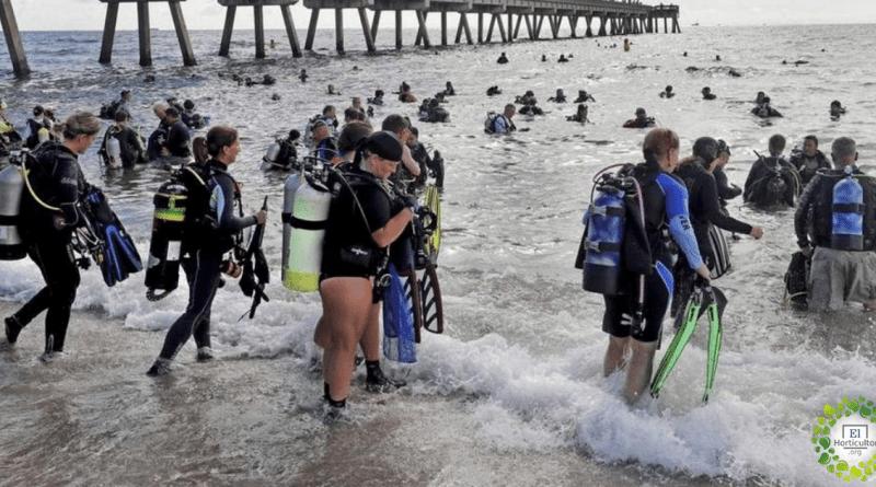 , 633 buzos rompen el récord de la limpieza submarina más grande del mundo