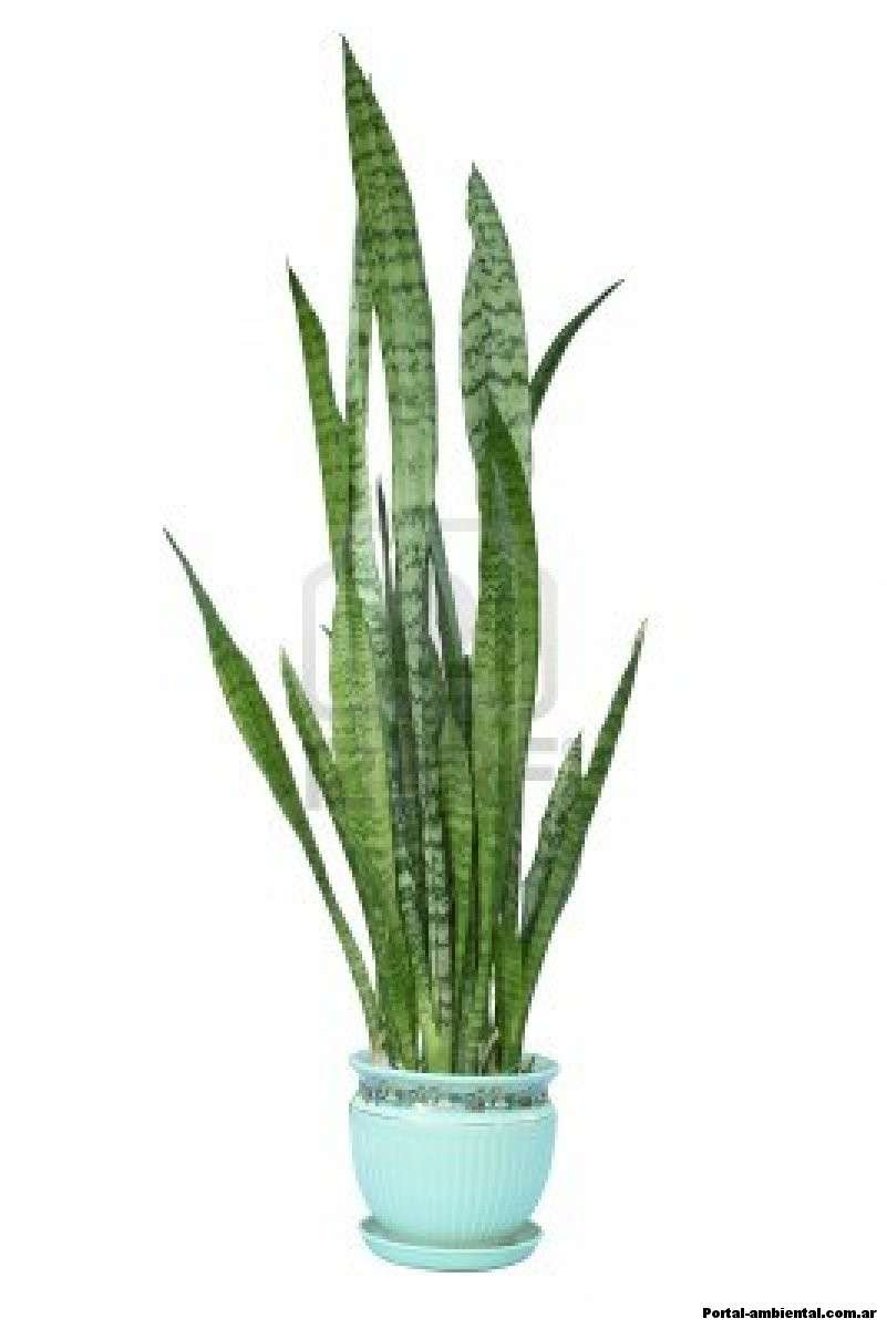 8 plantas de interior que limpian el aire el horticultor - Plantas de interior que purifican el aire ...