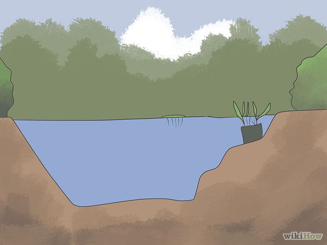 Grow an Edible Pond Step 4Bullet2.jpg