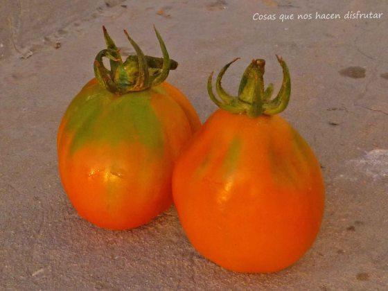 Nuevos tomates, nuevas catas