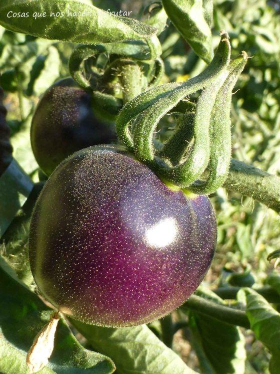 Un paseo entre tomates. Episodio I