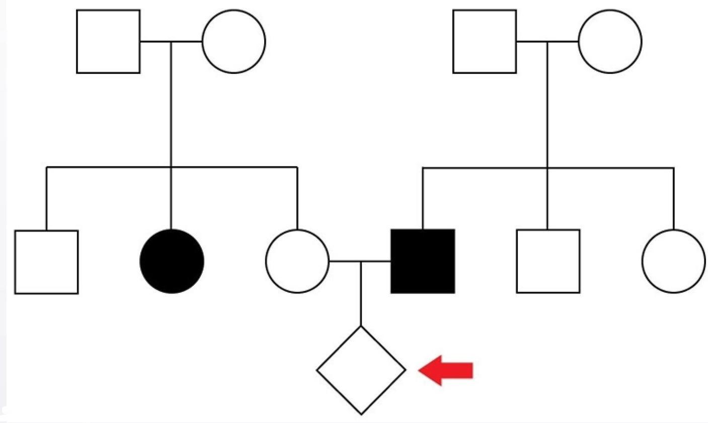 Quiz Genetics