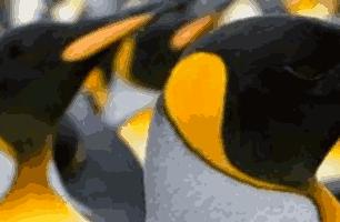 Como comprar o Linux